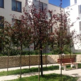 Сдается в аренду квартира 3-ком 86 м² Заря,д.1