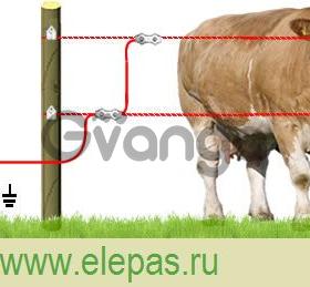 Электропастух для крс коров