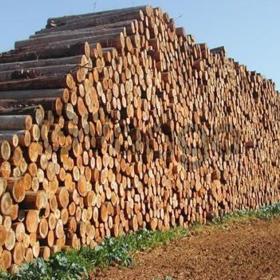 Продаю лес кругляк хвойных и других пород