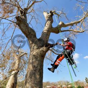 Спил, обрезка и удаление аварийных деревьев