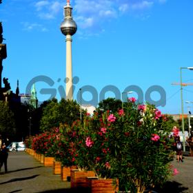 Пешеходная экскурсия по Берлину
