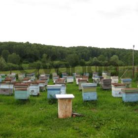 Продам улья с пчелосемьями
