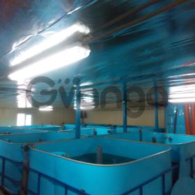 Осетровая домашняя ферма (УЗВ) 800 кг в год