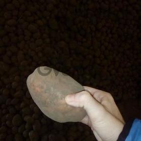 Картофель с хранилища, продовольственный молодой