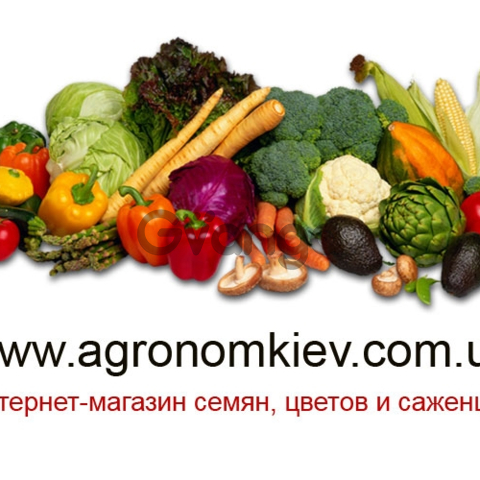 Интернет-магазин семян, цветов и саженцев, семена и саженцы почтой Украина