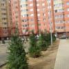 Сдается в аренду квартира 1-ком 44 м² Центральная,д.4