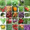 Весовые семена овощных культур.ОПТом