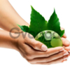Экологические услуги от ООО «ИРБИС-ЮГ»