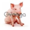 Электропастух для свиней