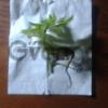 Продам растения/водоросли для аквариума