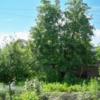 Продам ухоженный сад с посадками!