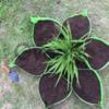 Клумба  цветник Звезда