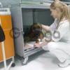 Широкий спектр ветеринарных услуг