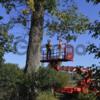 Удаление Опасных Аварийных Проблемных Деревьев