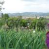 Флоренция. Гид. Отдых с детьми. Экскурсии