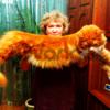 Котята от Чемпиона Мира