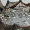 Продам акции рыбного хозяйства