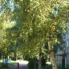 """Сдам двухкомнатную квартиру в Солнечногорске, дом отдыха """"Сенеж""""."""