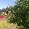 Продается участок 1200 м² деревня Никольское
