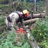 Спилить дерево уже сегодня!