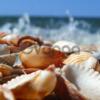 Кормовая ракушка дробленная морская и речная