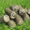 Реализуем брикеты из биомассы